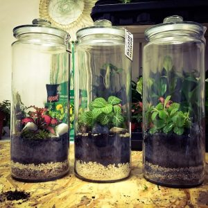 rośliny w szklanych pojemnikach