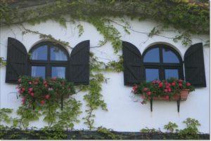 kwiaty na budynku