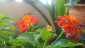 rośliny czyste powietrze