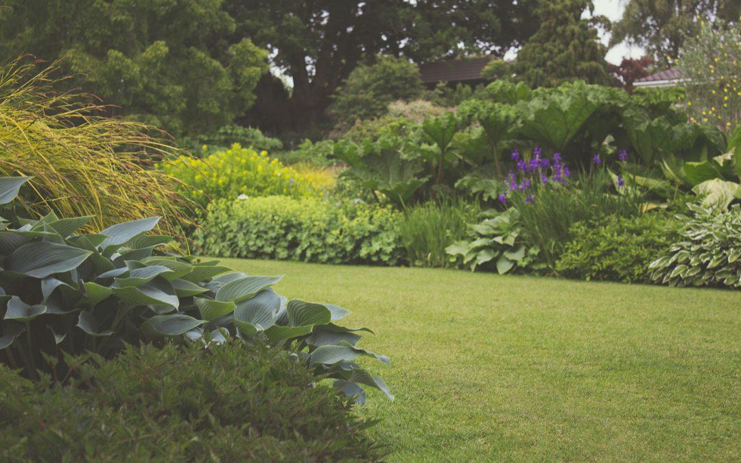 przestrzeń w ogródku